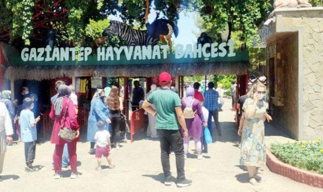 Gaziantep Hayvanat Bahçesi'nden Aslan Kaçtı
