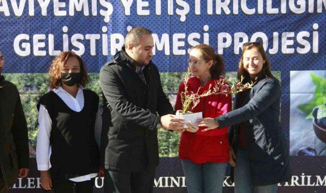 """Bursa'da üreticilere """"mavi yemiş"""" fidanı dağıtıldı"""